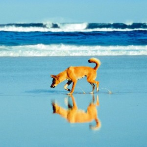 Surviving the Trip to Fraser Island in Australia