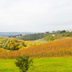 Tuscany Tours from Florence with Viator